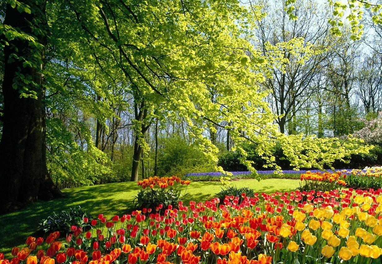 Vzone photos fr for Commander des fleurs pour jardin